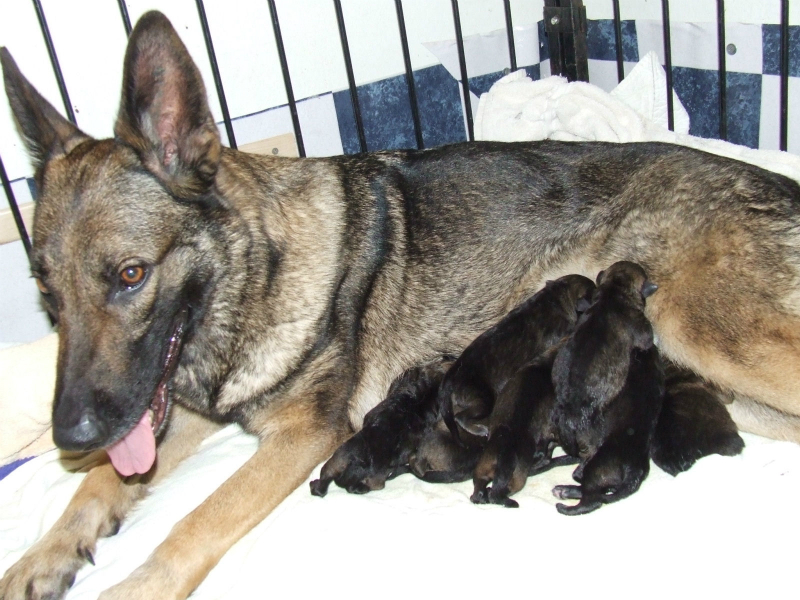 cay-and-pups-at-2-days