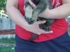 6-wks-org-paws
